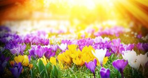 Spring Workshop - Honoring our Parents and Loved Ones, Farmingdale @ Good Shepherd Hospice Administrative Office   Farmingdale   New York   United States
